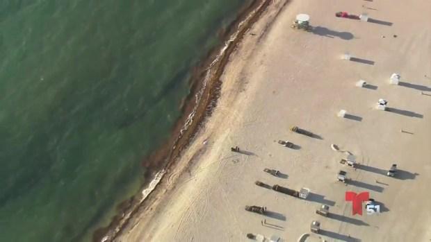 [TLMD - MIA] Encuentran cadáver de mujer en la arena de Miami Beach