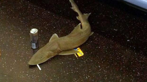 Video: Descubren qué hacía tiburón en el tren