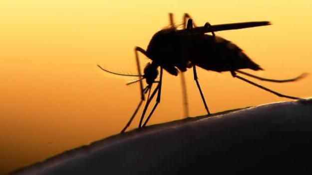 Miami combate el zika con rayos ultravioletas... y celebridades