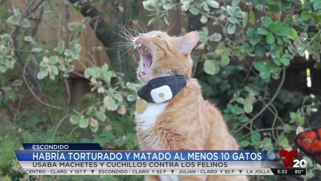 Habría torturado y matado al menos 10 gatos