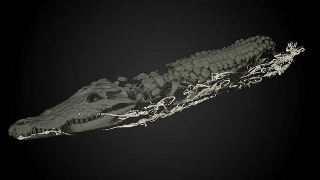 Descubren crías al interior de momia de cocodrilo