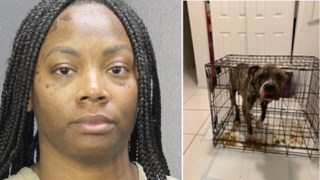 Mujer de Florida acusada de crueldad animal