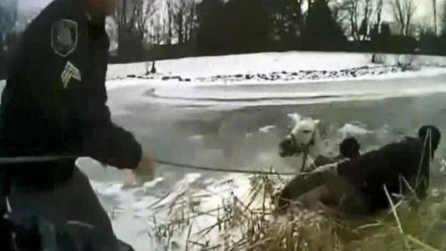 Se arriesgan para salvar a caballo de morir congelado
