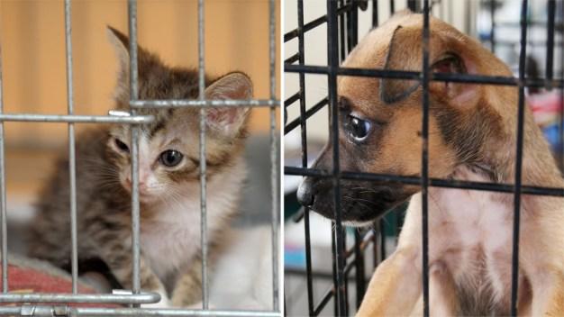 Adoptan mascotas en campaña Desocupar los Albergues
