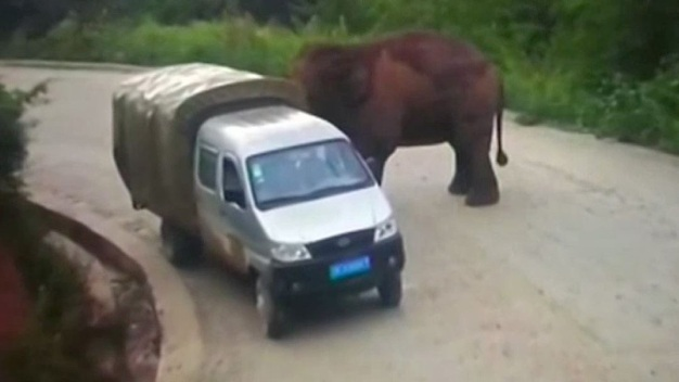 China: elefante salvaje ataca dos vehículos