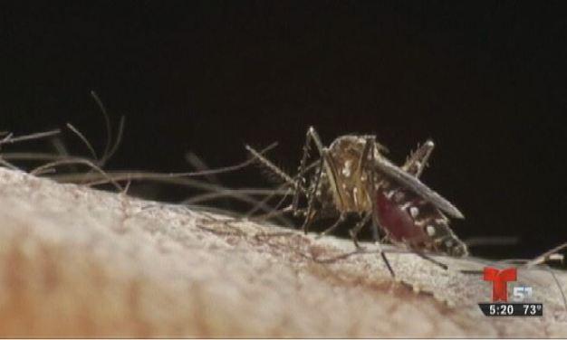 Nuevos casos de zika en Miami-Dade