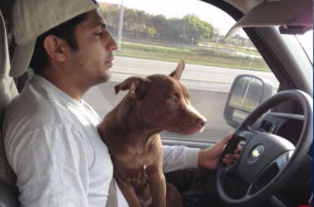 En el Día Nacional del Perro en EEUU