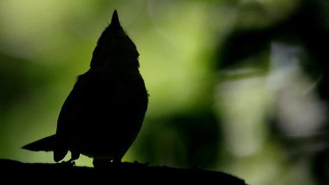 Cambio climático extinguirá 1 de cada 6 especies