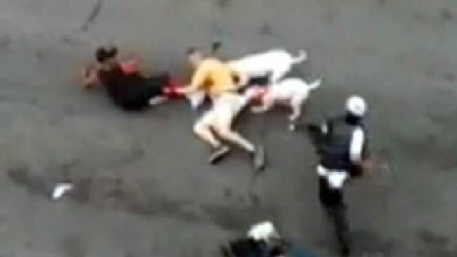 Brutal ataque de pit bulls captado en video en NY