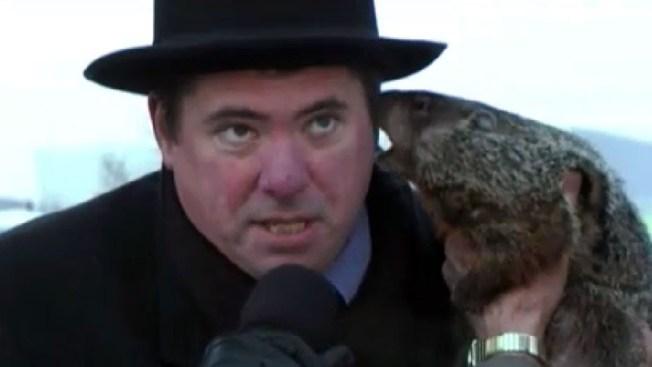 Rabioso secreto de marmota a alcalde