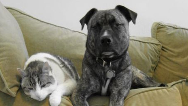 Albergues para mascotas