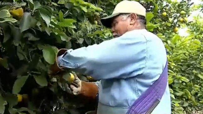 Campesinos trabajan expuestos al peligro