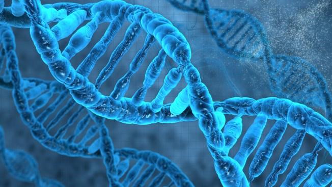 Tu ADN podría sustituir los discos duros