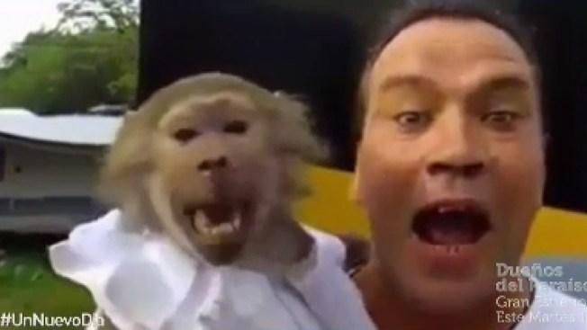 ¿Quién es el más mono?