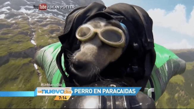 Video: Mascotas de las redes sociales