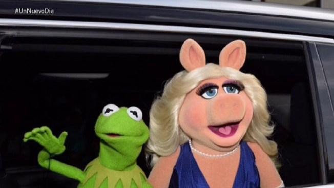 La rana René y Miss Piggy se separan