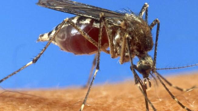 Confirman aquí caso de dengue