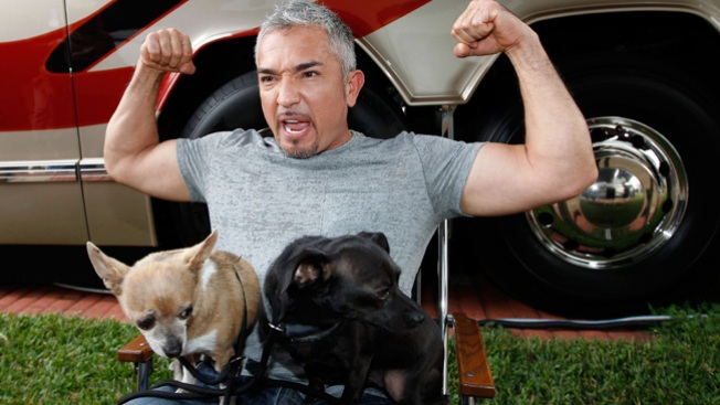 Marcha por derechos caninos