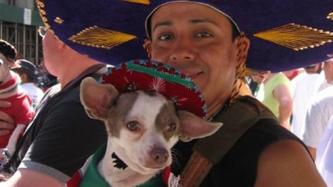 ¡Viva México con Telemundo!