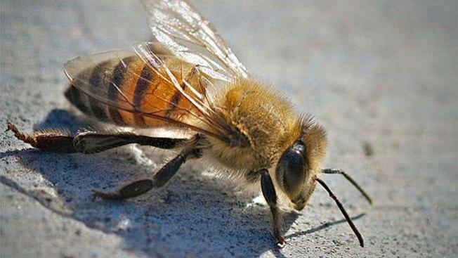Enfrentó una nube de abejas con una manguera de agua