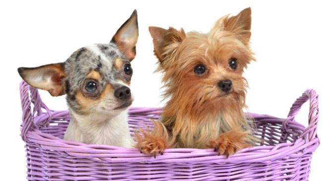 Mascotas buscan un hogar