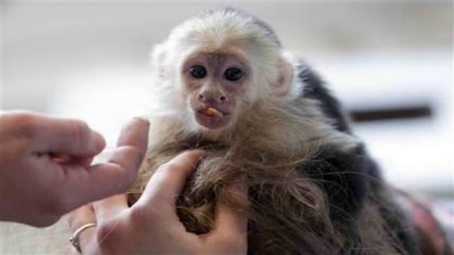 Lío de Bieber con un mono