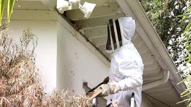 Miami: 60 mil abejas en una casa
