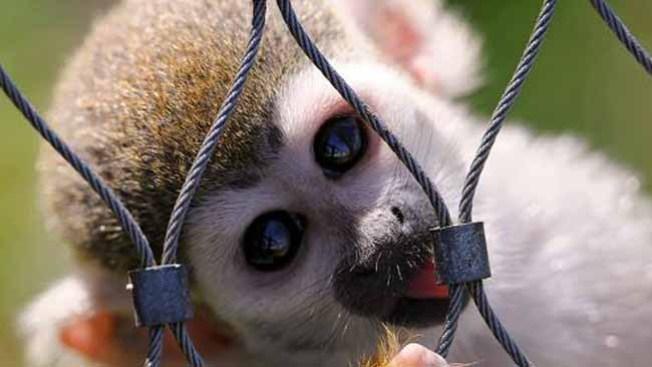 Animales preciosos, pero mortíferos