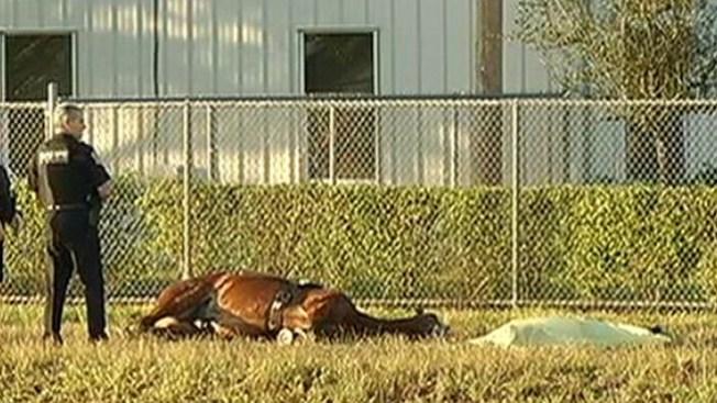 Hallan muerta a una joven y a su caballo
