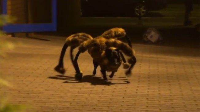 """""""Araña"""" gigante aterroriza a transeúntes"""
