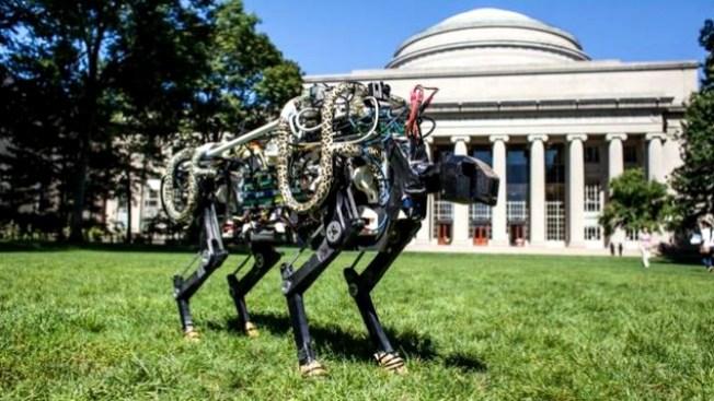 Robot felino podría ganarle a Usain Bolt