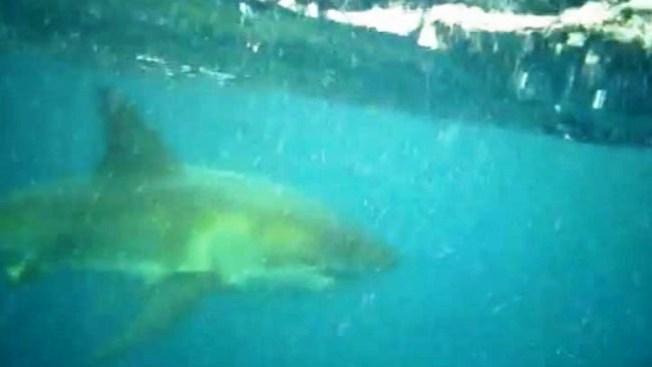 Tiburones al acecho