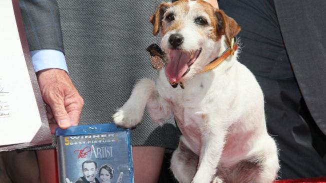 "El perro de ""The artist"" ¡best-seller!"