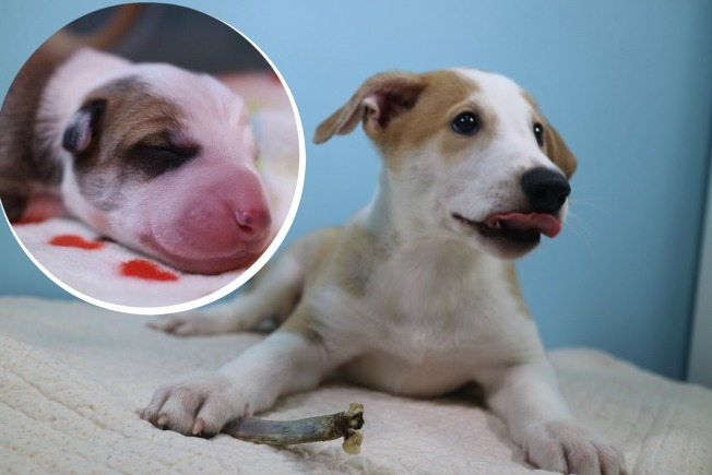 Familia porteña no pudo superar la pérdida y clonó su perro
